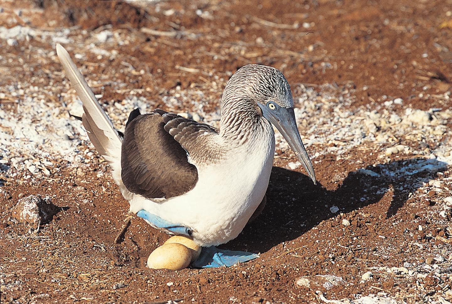 Visit Ecuador and Galapagos Island , CTS Horizons