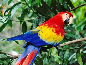 Costa Rica General (2).jpg