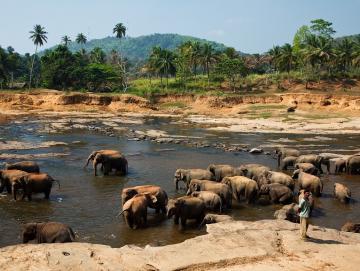 Tailor Made tour to Sri Lanka CTS Horizons.jpg
