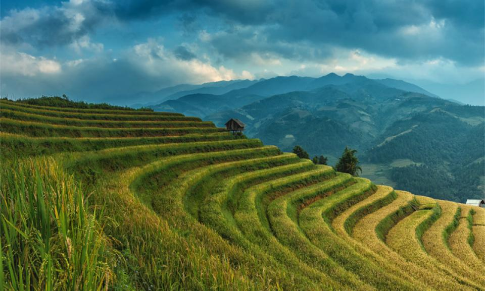 rice fields landscape.jpg